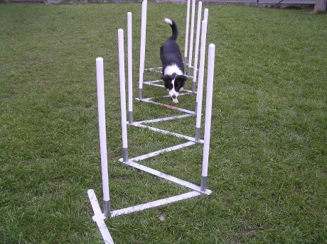 tunnels for dogs   tunnels for agility   photo album