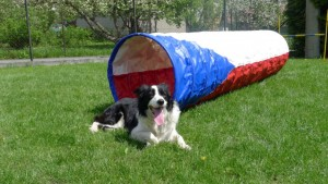 official-agility-tunel-for-world-cup-2012---01.jpg